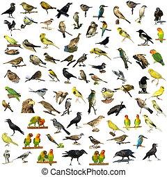 81, fotografier, isoleret, fugle
