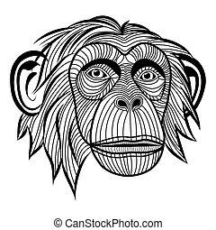 abe, ape, chimpanse, anføreren, dyr