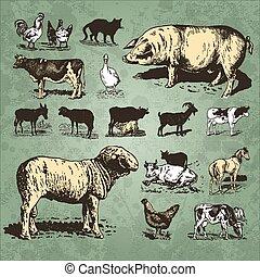agerjord, vinhøst, sæt, dyr, (vector)