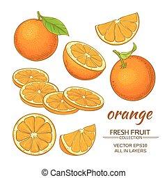 appelsin, vektor, sæt