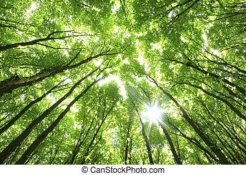 baggrund, grønnes træ