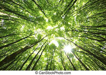 baggrund, træer