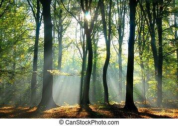 bjælker, igennem, træer, hæld, lys