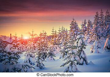 bjerg, vinter, colorful solopgang, landskab, skov