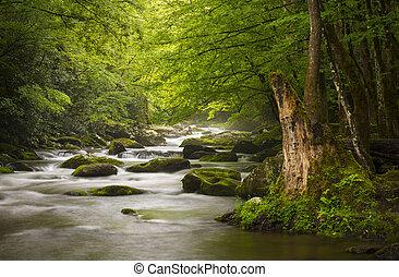 bjerge, great, slapp, natur, røgfyldte, park, gatlinburg, tennessee., fredsommelige, tågede, tremont, flod, national, landskab, scenics