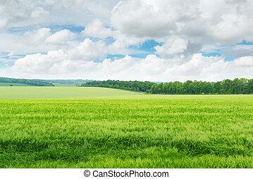 blå, felt, himmel, grønne