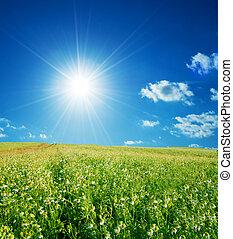 blå, forår blomstrer, himmel felt