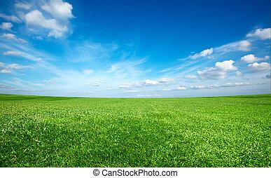 blå himmel, felt, grønne, under, frisk, græs