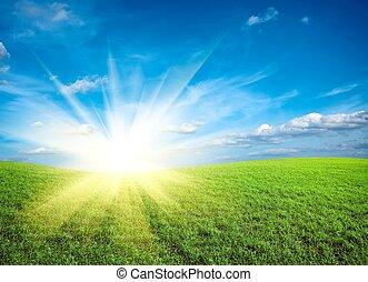 blå himmel, grønnes felt, solnedgang, under, frisk, græs