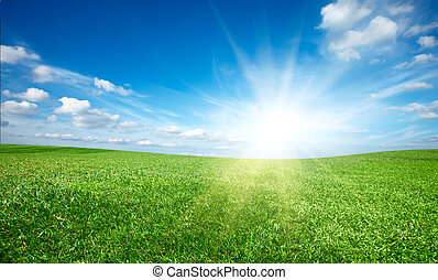 blå, sol, himmel, grønnes felt, solnedgang, under, frisk, græs
