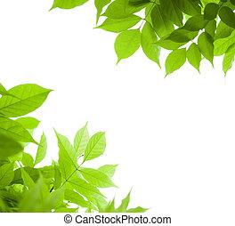 blåregn, vinkel, hen, -, side, grøn baggrund, blad, hvid, grænse, blade