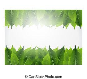 blad, baggrund