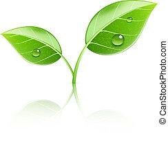 blade, grønne, blanke