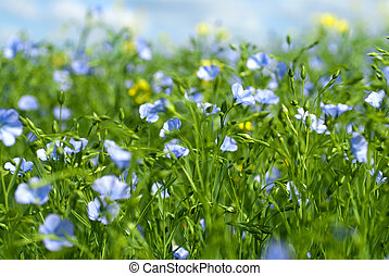 blomster, flax