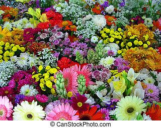 blomster, udstilling