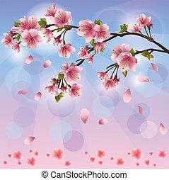 blomstre, forår, -, japansk, træ, sakura, baggrund, kirsebær