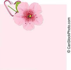 blomstre, kirsebær, brev