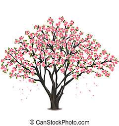blomstre, kirsebær, hen, træ, japansk, hvid