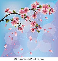 blomstre, kirsebær, -, sakura, japansk