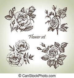 blomstrede, set., hånd, roser, illustrationer, stram