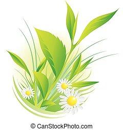 chamomile, naturlig, planter