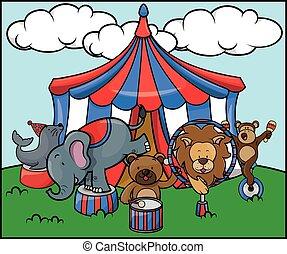 cirkus, dyr, safari
