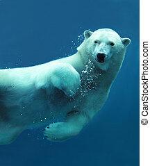 close-up, underwater, polar fød