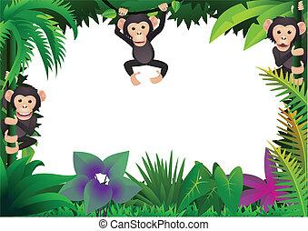 cute, chimpanse, jungle