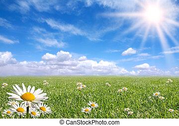 dag, udenfor, klar, glade, forår