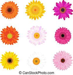 daisies, farverig