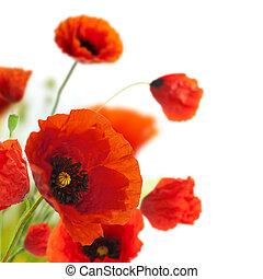 dekoration, -, blomster, valmuer, blomstrede, hjørne, grænse, konstruktion