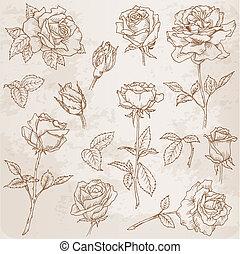 detaljeret, blomst, hånd, roser, vektor, stram, set: