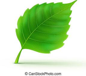 detaljeret, grønnes blad