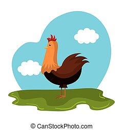 dyr, agerjord, kylling, felt