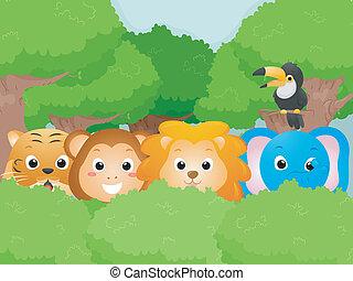 dyr, safari