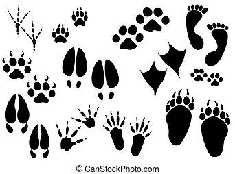 dyr, vektor, trails, -