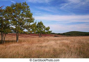 efterår, græsgang, scene