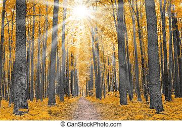 efterår, nature., skov