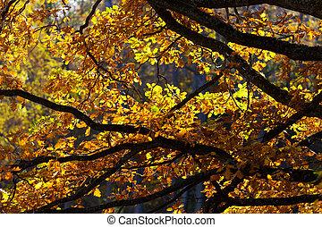 efterår, sol, blade