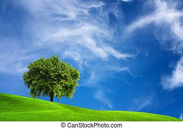 eg træ, natur