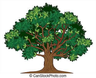 eg, vektor, træ