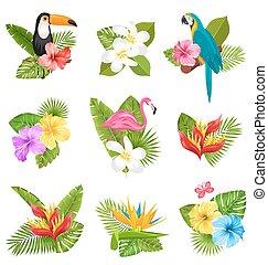 eksotiske, planter, sæt, tropical blomster, komposition, fugl