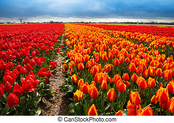 felt, blomster, baggrund