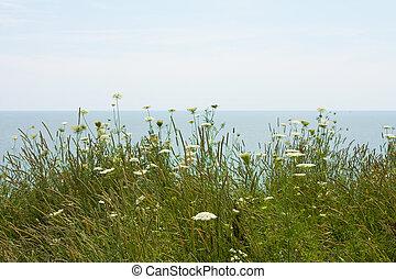 felt, blomster, sø