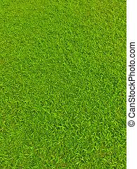 felt, fodbold, grønnes græs