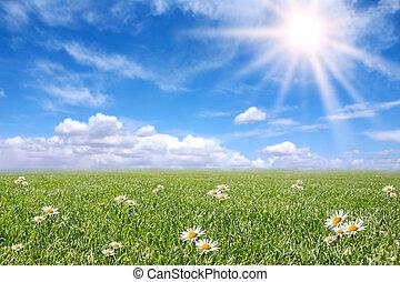felt, forår, solfyldt, serene, eng