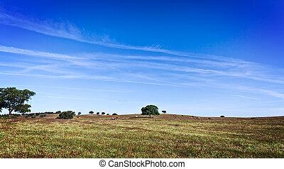 felt græs, grønnes landskab