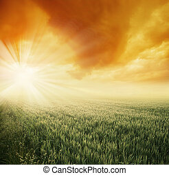 felt, solfyldt, formiddag