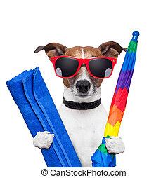 ferier, hund, sommer