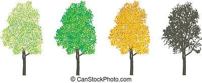 fire sæsoner, træ